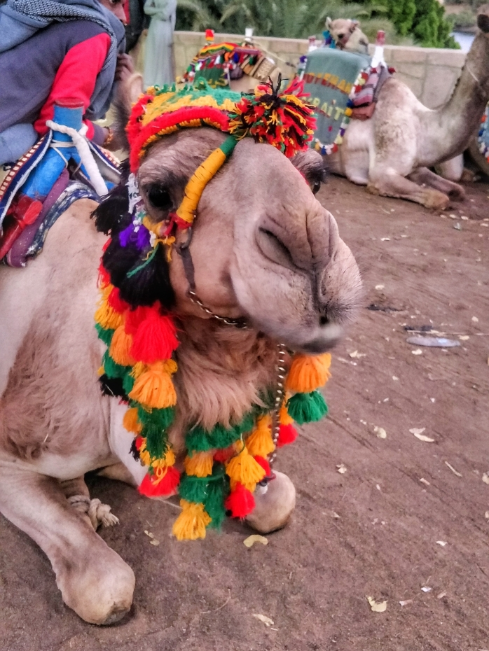 Decorated camel at a Nubian village