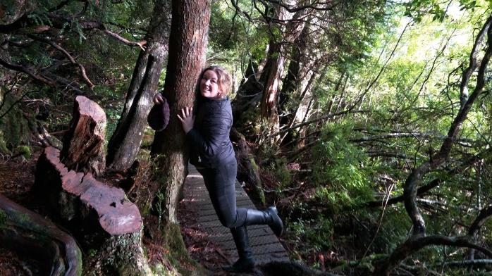 Chasing Emma hugging a tree on the Dove Lake walk