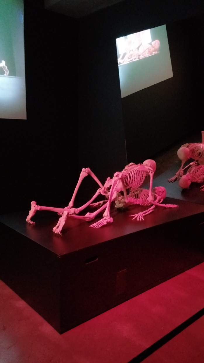Two skeletons mimicking sex