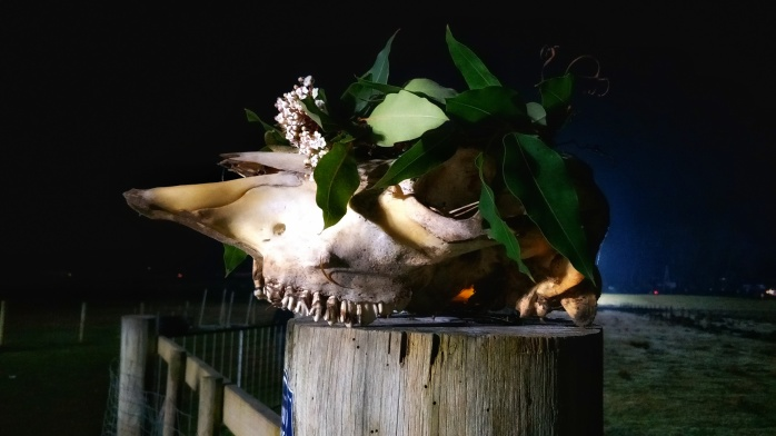 A cow skull wearing a flower crown and the The Burning Man at the Huon Valley Mid-Winter Festival