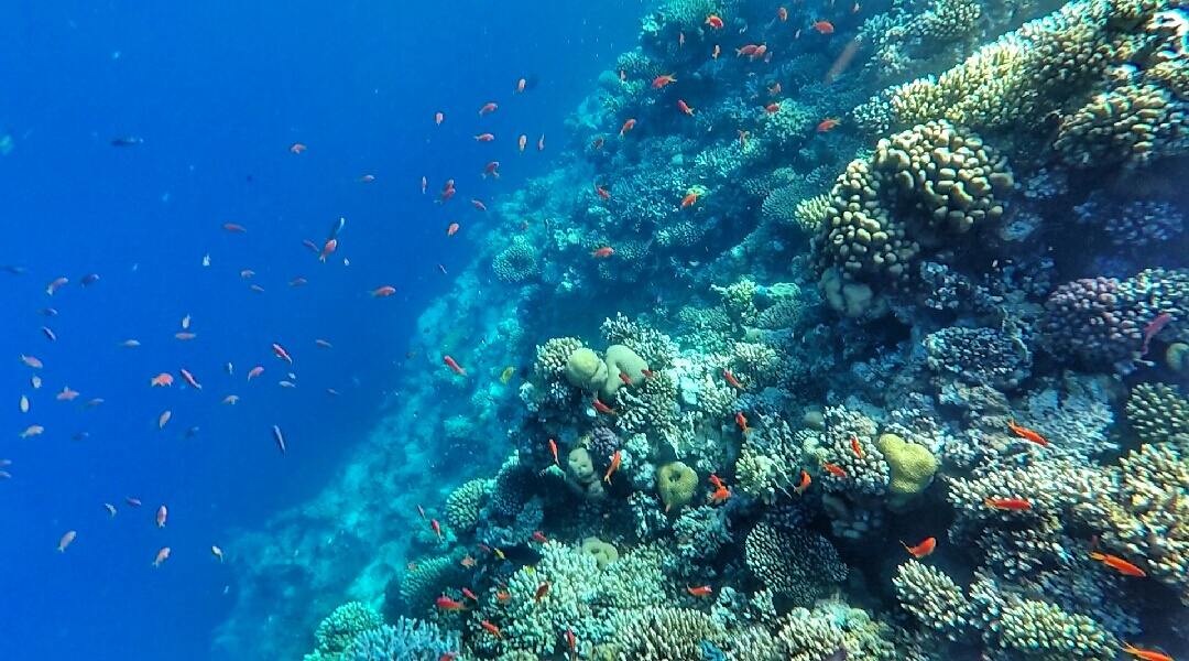 Coral and fish at the edge of the Blue Hole in Dahab