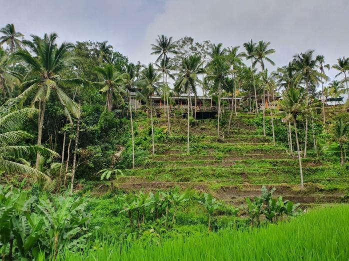 Tegalalang Rice Terrace Ubud Chasing-Emma.com