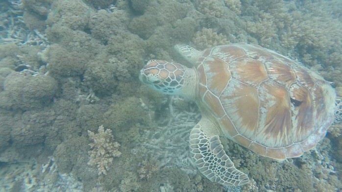 Snorkling with turtles in Gili Islands Chasing-Emma.com