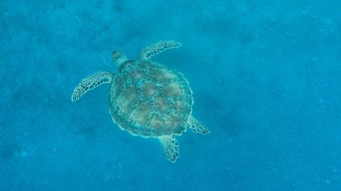 Snorkling with turtles in the Gili Islands Chasing-Emma.com