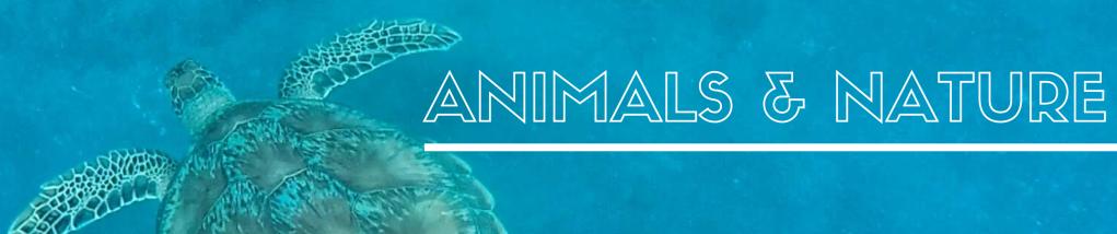 Animals & nature bucket list ideas